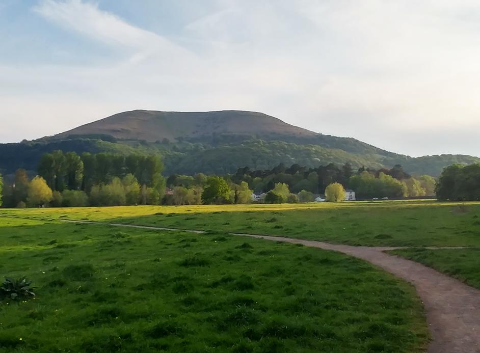 Castle Meadows