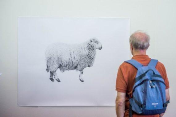 Eisteddfod Sheep