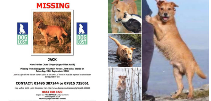 Have you seen Jack the ginger Terrier?