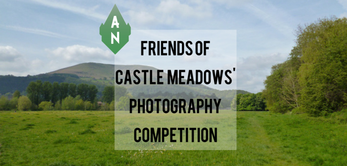 Friends of castle Meadows Photography Competition
