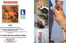 Jack Missing Dog