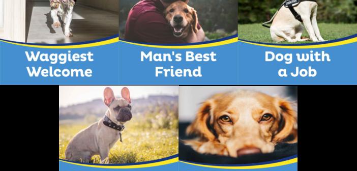 dog-award-category-pics