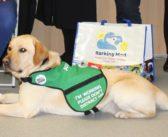 Assistance Dog Named after Prince Harry Transforms Life of Namesake, aged 6